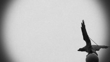 Wie der Adler soll der Felix fliegen!